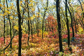 Bright colorful autumn forest
